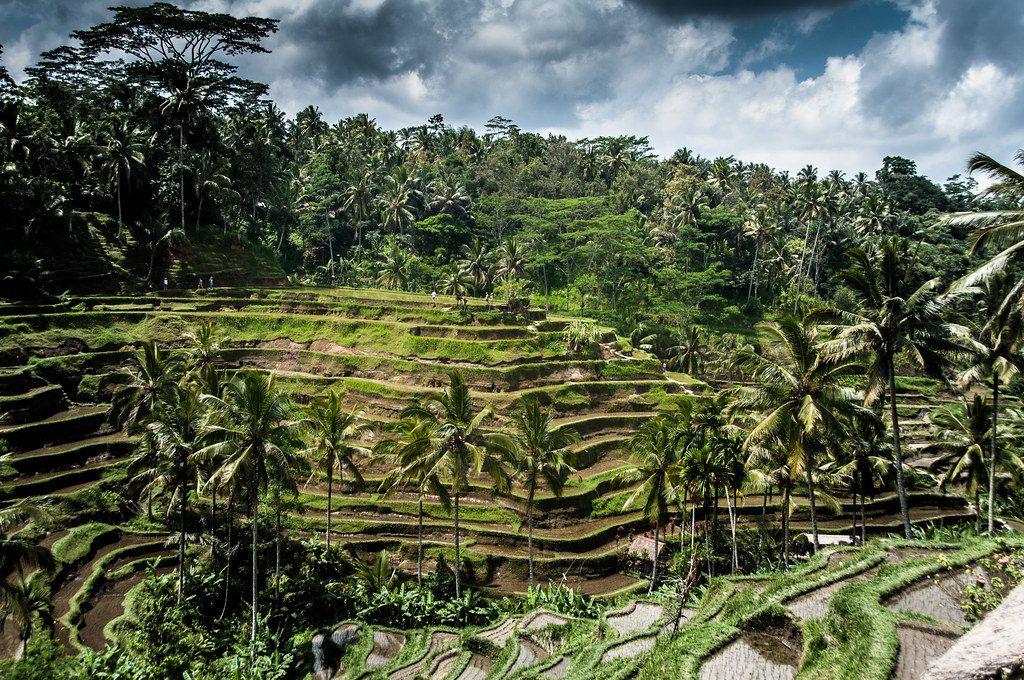 Bali Cosa Vedere E Fare Sull Isola Indonesiana