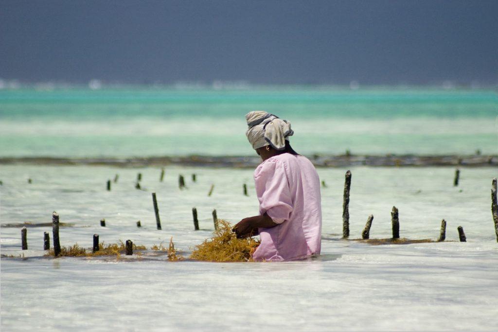 donna-raccoglie-alghe-marine-a-zanzibar