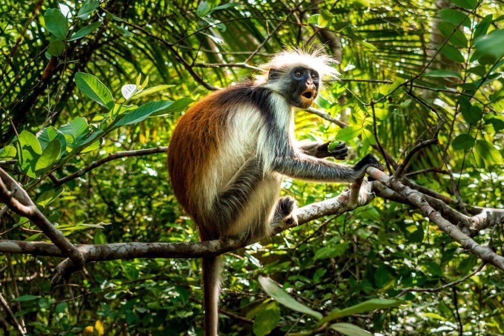jozani-forest-zanzibar