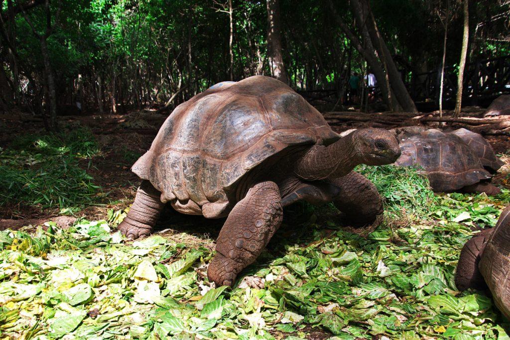 tartarughe-prison-island-zanzibar