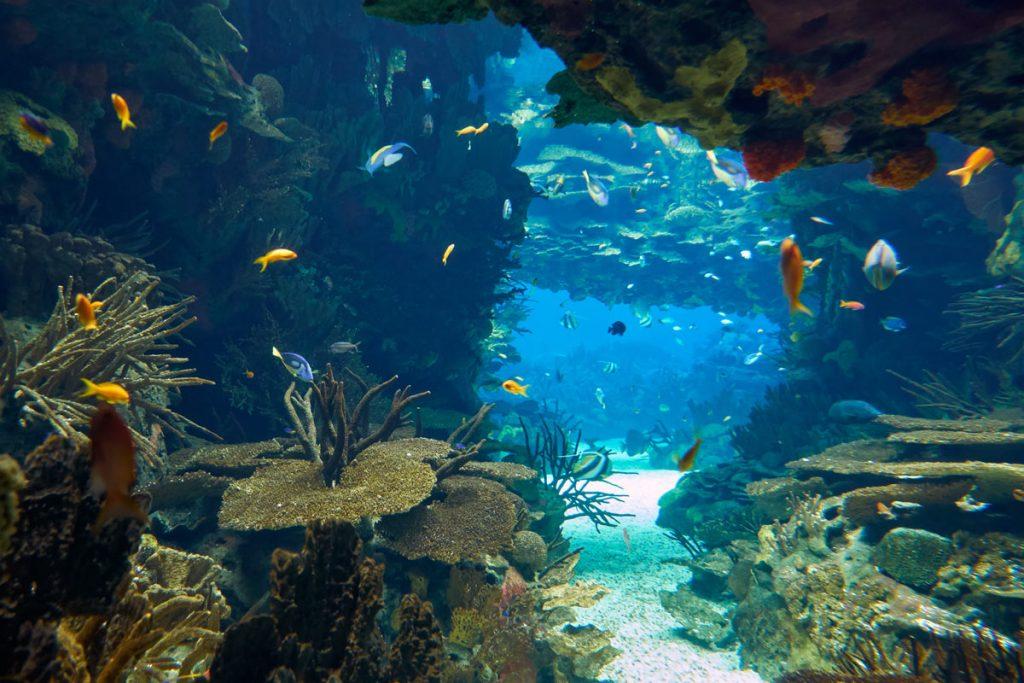 acquario lisbona